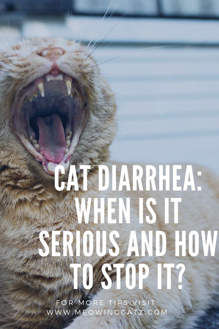 Cat Diarrhea Causes And Remedies Cat Diarrhea Cats Cat Diseases