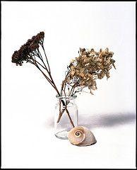 Dead Flowers VI (Sandro Reinhard) Tags: flowers mamiya film analog kodak 6x7 portra rz67 mittelformat 140mm