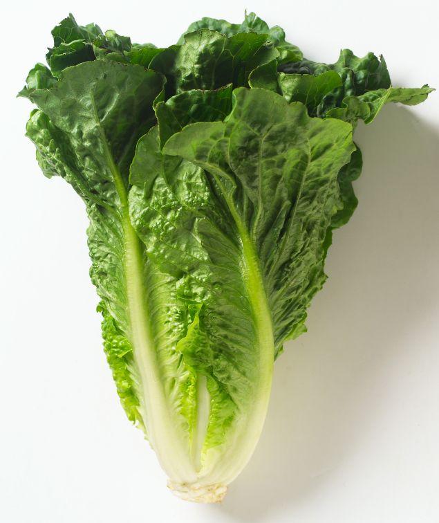 romaine lettuce | Nutritional Value of Iceberg and Romaine Lettuce