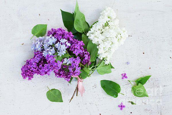 Posy of fresh #lilac #flowers on white wooden table by Anastasy Yarmolovich #AnastasyYarmolovichFineArtPhotography