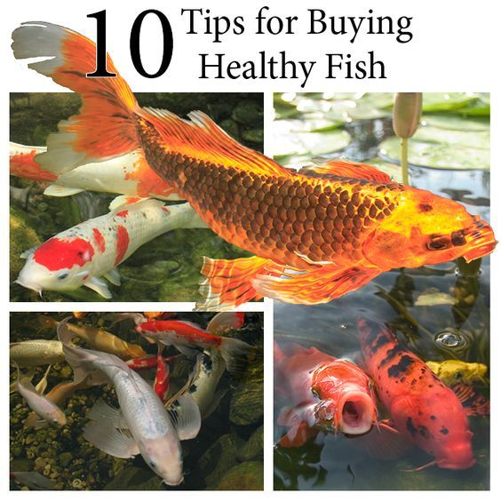 10 Tips for Buying Healthy Fish