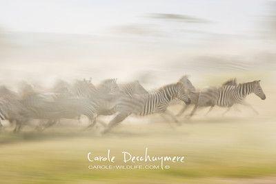 Portfolio - carole-wildlife.com