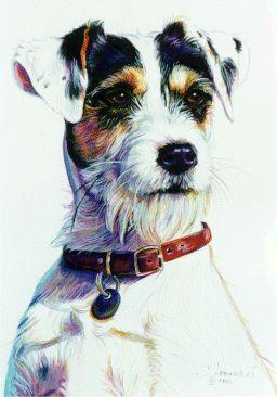 Canine Portraits - Gallery - watercolour: Suzanne Leonard
