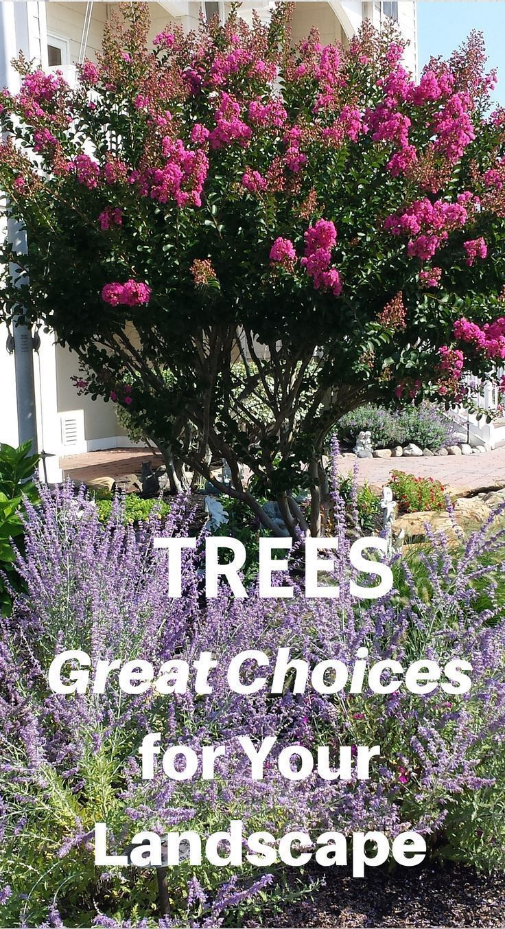 287 best trees images on pinterest plants flowering trees and