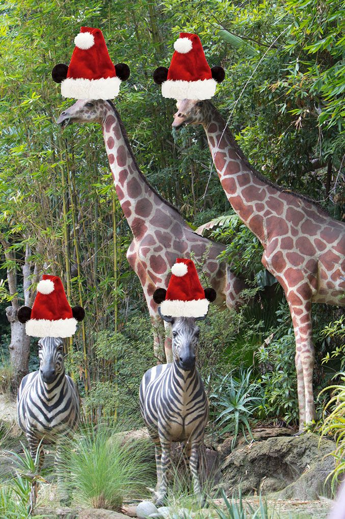 A holiday-themed update is coming to The Jungle Cruise ...