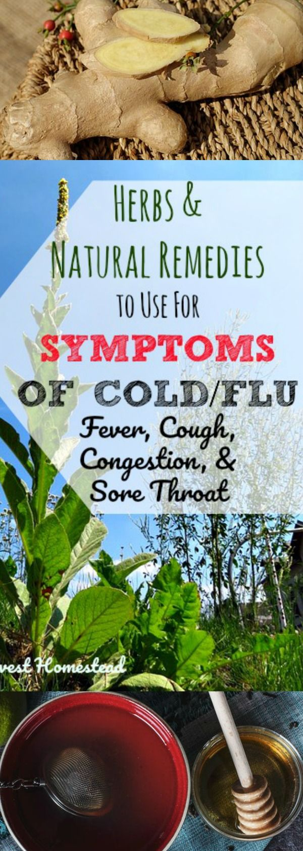 You ended up with a bad cold or flu, and now you're suffering from the symptoms...UGH. Well, here are natural remedies and herbs to use to help with the symptoms of colds & flu, including cough, congestion, fevers, and sore throat. Find out how to make teas, tinctures, and syrups that work for your cold & flu symptoms.