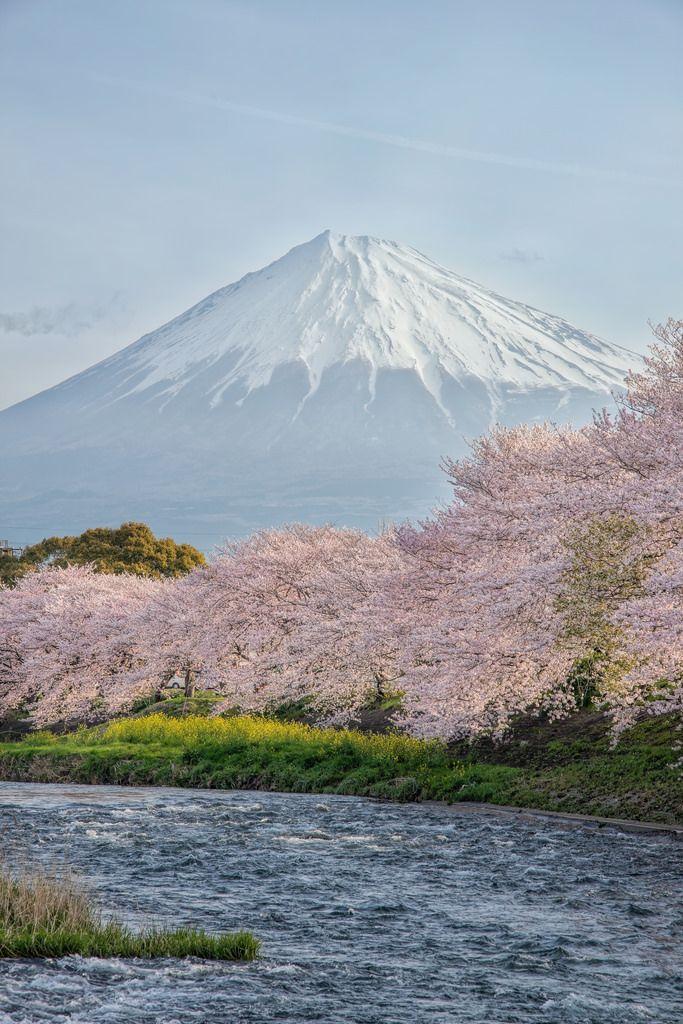 "radivs: ""'Spring in Japan' by Yuga Kurita © Yuga Kurita Do not remove the credit!"" The World Around Us"