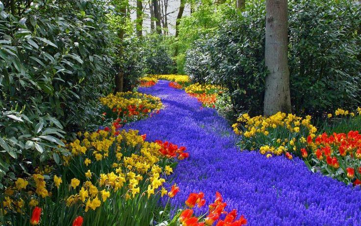 Bir orman full çiçekler ile kaplanmış bence çok güzel