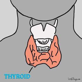 Conheça os sinais que podem indicar Distúrbio da Tireoide. Veja os sinais que nosso corpo manda quando há algo errado de verdade.  A tireoide é uma pequena glândula localizada no pescoço, mas com uma grande responsabilidade, regular o funcionamento de órgãos vitais, como o coração, cérebro, fígado e rins.