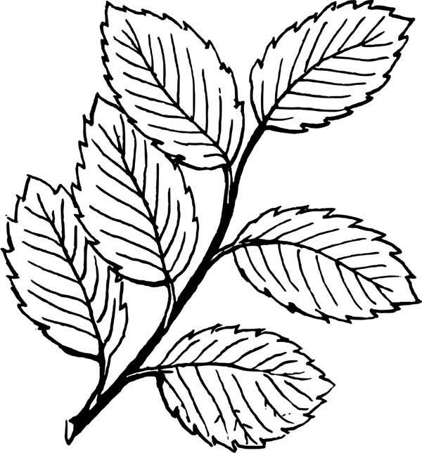Falling Leaves Image Coloring Pages : Bulk Color di 2020