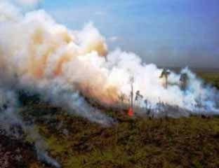Kebakaran Lahan Meluas hingga Areal Sawit PT Surya Dumai