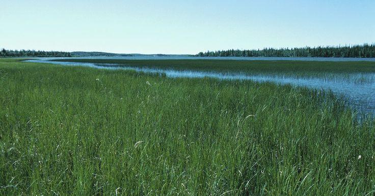 Diferencias entre estepas y sabanas. Las estepas y sabanas son dos ejemplos de muchos biomas de la Tierra. Un bioma es una región que cuenta con plantas y formas de vida animal similares. Las regiones son generalmente contiguas. Un desierto, por ejemplo, es un bioma. Las praderas también son biomas. Las sabanas y las estepas son dos ejemplos de biomas de pradera. Como ambas son ...