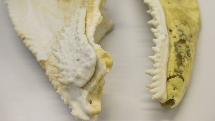 August 16 2017 at 02:36PM 400-million-year-old fish fossil reveals jaw structure linked to humans https://phys.org/news/2017-08-million-year-old-fish-fossil-reveals-jaw.html  [PhysOrg]