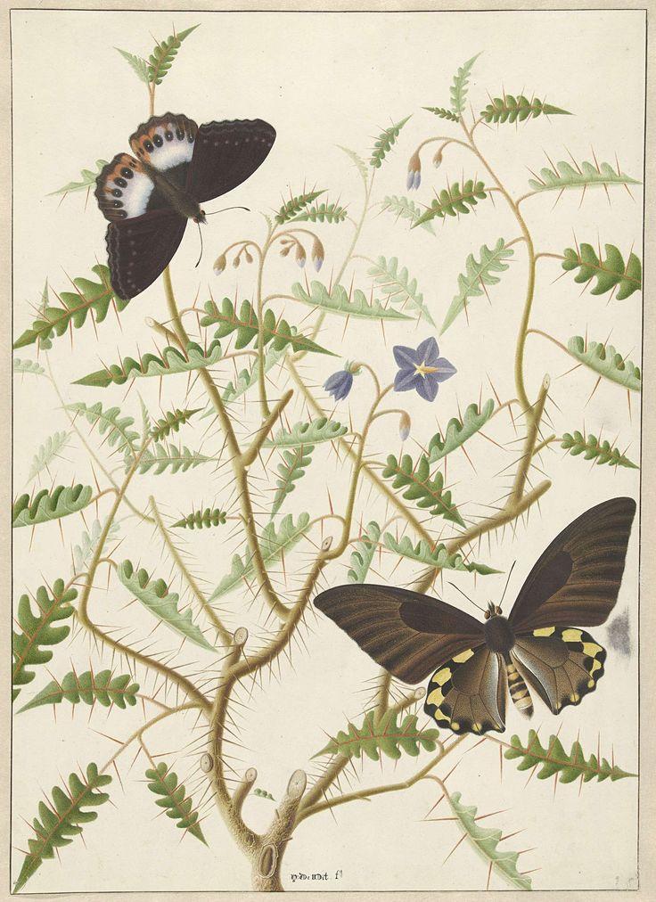 Een bloesemende struik met twee uitheemse vlinders, Hermanus de Wit, 1774 - 1842