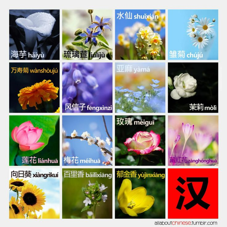 chinese flower names english thin blog