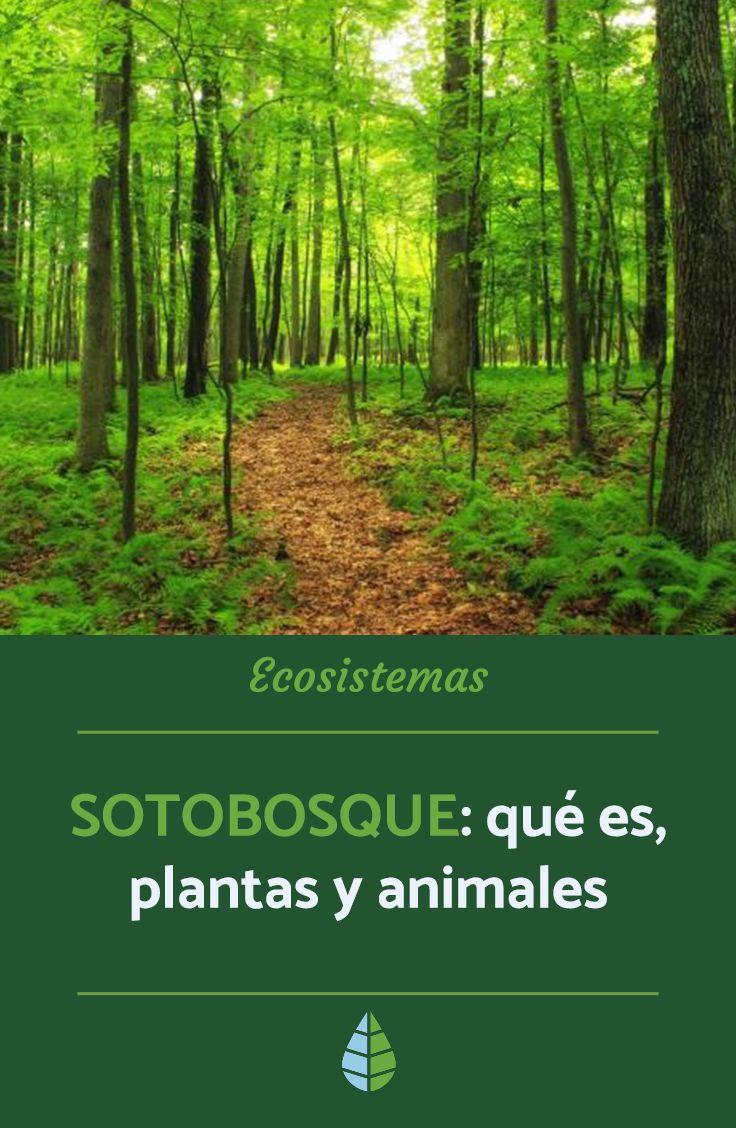 Sotobosque Qué Es Plantas Y Animales Resumen Ecosistemas Tipos De Ecosistemas Plantas