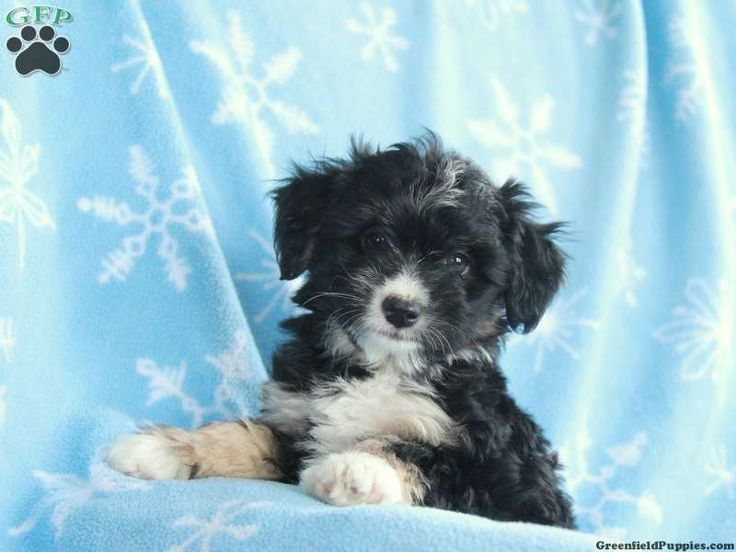 Dogs And Puppies For Sale In Bc