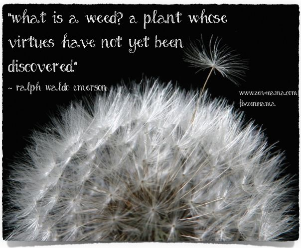 What is a weed? A plant whose virtues have not yet been discovered.   Ralph Waldo Emerson.  From Zen Mama