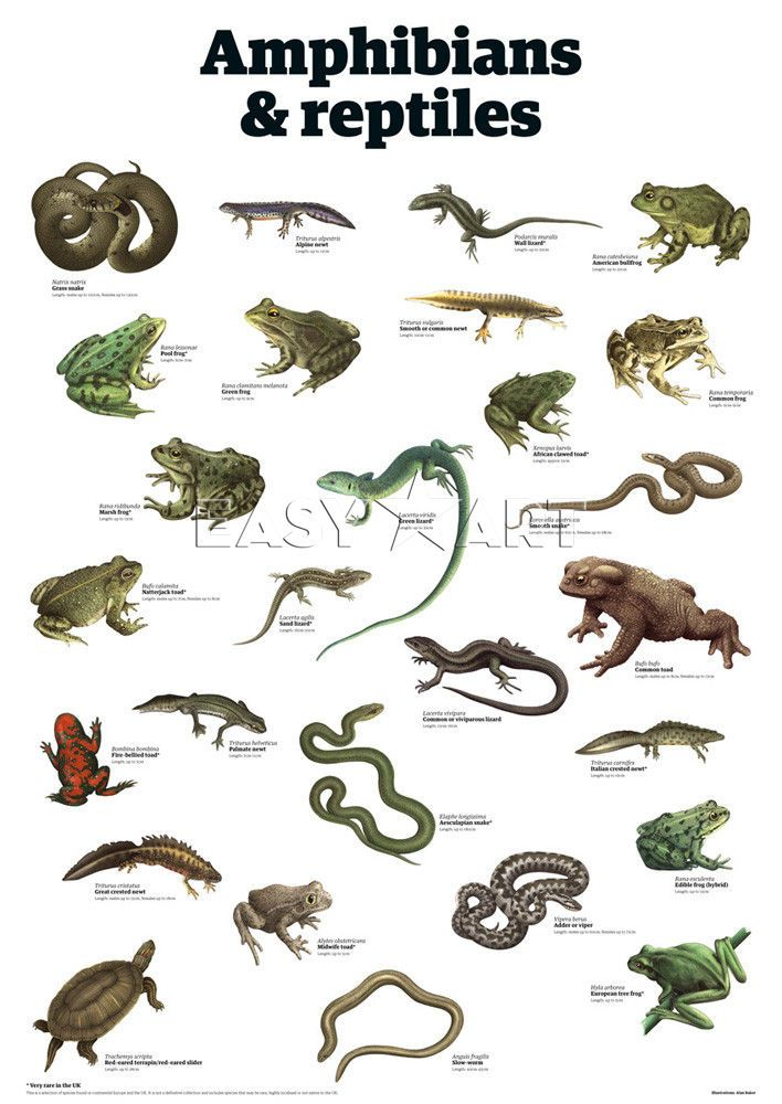 1000+ images about Amphibians & Reptiles, crafts and ...