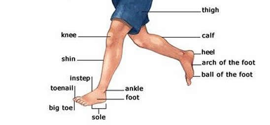 Learning Vocabulary for leg parts