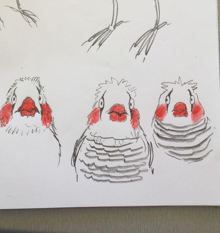 more finches looking like clowns - head studies... #leonarddoesntdance #finch #birds