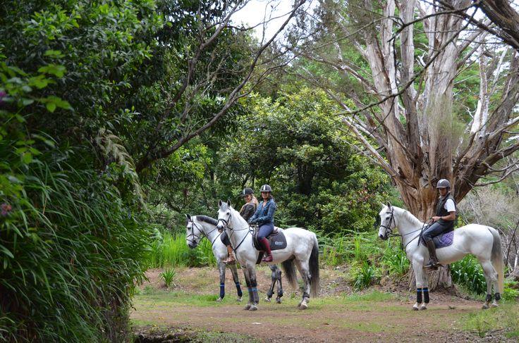 Enjoying one of Madeira's famous Levadas on horseback! #horsebackriding #horse #nature #madeira #natur #pferd #cheval #reiten #équitation
