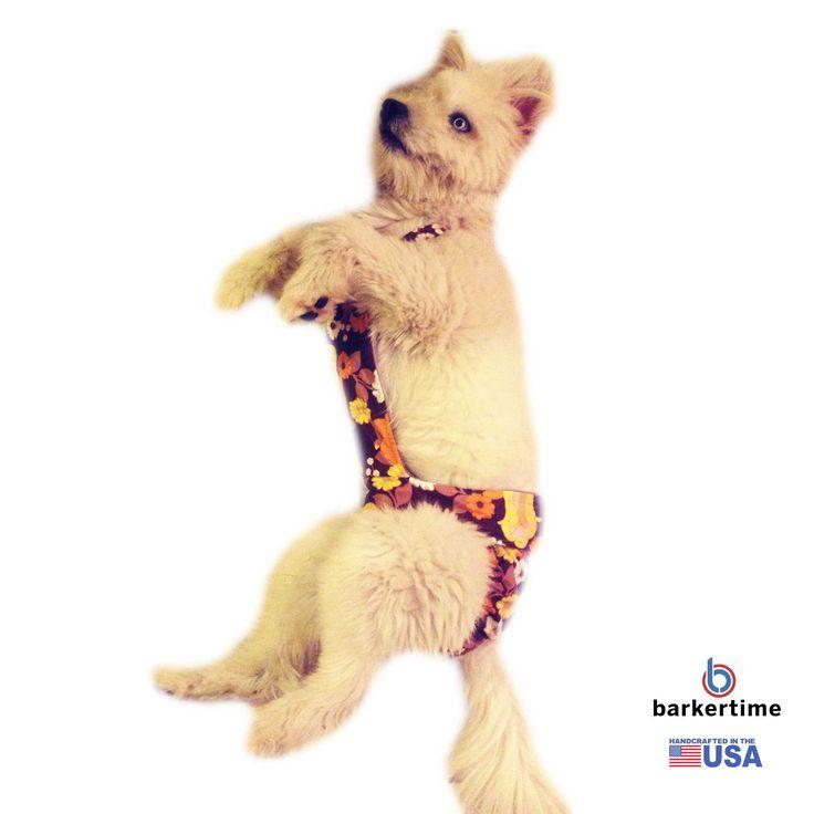 39 besten dog Bilder auf Pinterest | Hund katze, Haustiere und ...