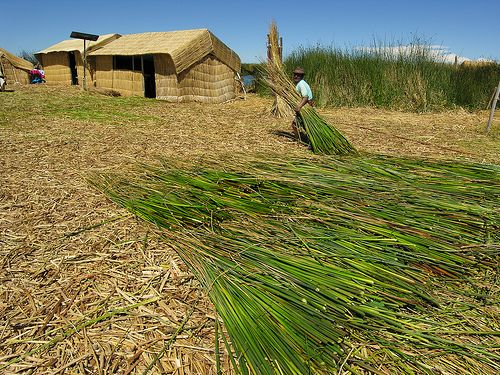 ANS178DSCN5570    >>>>  The Uros build their houses with totora plants.