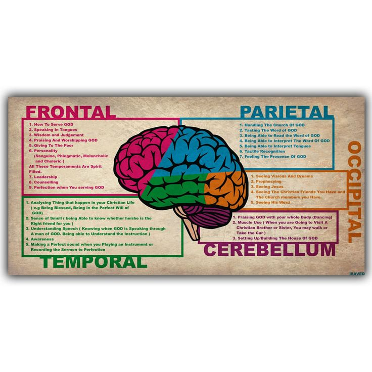 Human Science Human Brain Diagram Lobes Medical Knowledge Silk Poster Printing, Custom Wallpaper Decorated Hospital QT101 #Affiliate