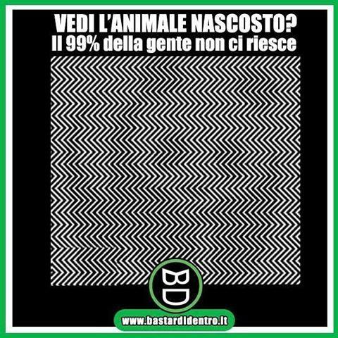 Se riesci a vedere l' #animale nascosto fai parte di un raro 1%! Tagga i tuoi amici e #condividi #bastardidentro… www.bastardidentro.it