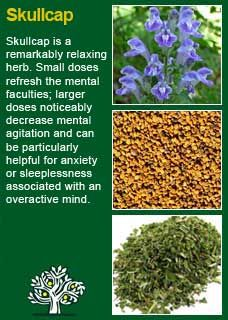 """Skullcap is one of the finest nervines and antispasmodics given to humanity. It should be on every physician's shelf"" (a nervine is a herb that works on the nervous system and an antispasmodic is a remedy that relieves cramp and relaxes the body)"