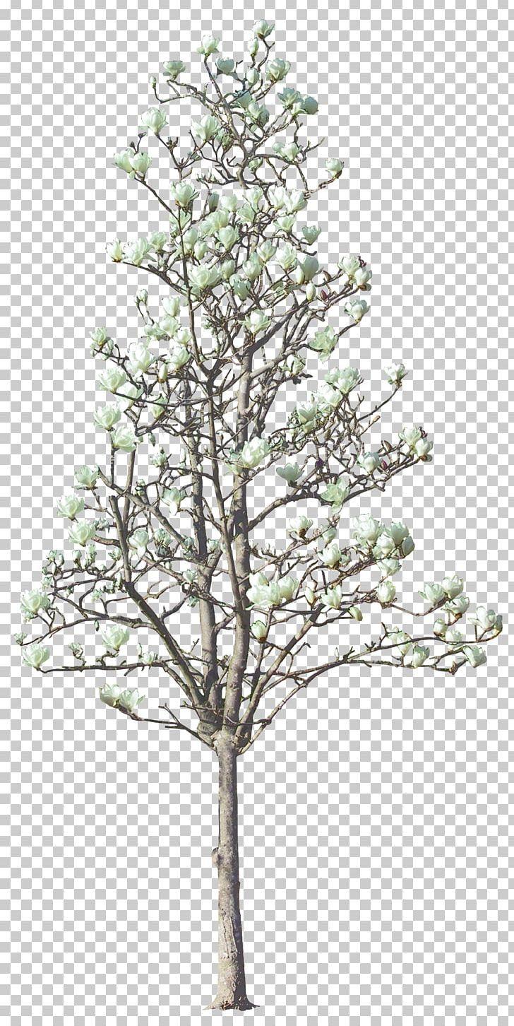 Tree Magnolia Euclidean Png Big Branch Christmas Tree Conifer Elm Fall Wallpaper Tumblr Fall Wallpaper Magnolia