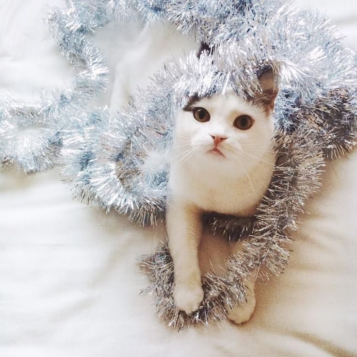 Every stare has it's own meaning. I wonder what this Tinsel kitten is saying? :P http://criticalshadows.com/videoportals/