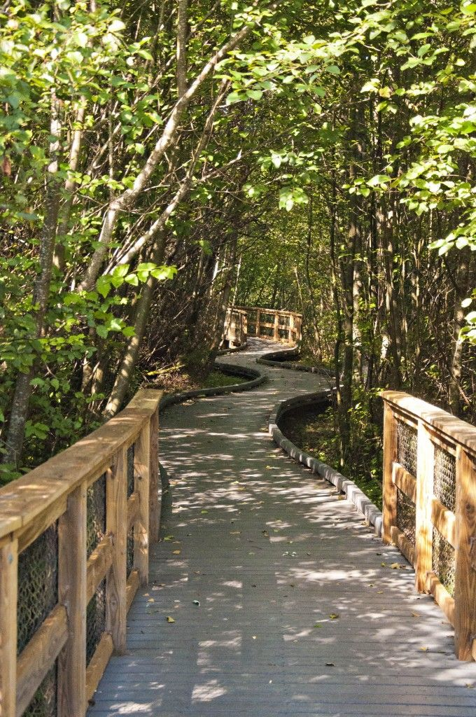 Narbeck Wetland Sanctuary in Everett, WA (near Boeing)