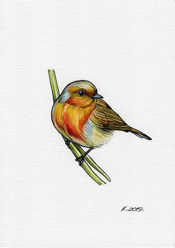 Bird Watercolour Illustration Robin Little Bird Painting Bird