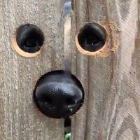 Komşunun Köpeğine Yapılabilecek En Büyük İyilik