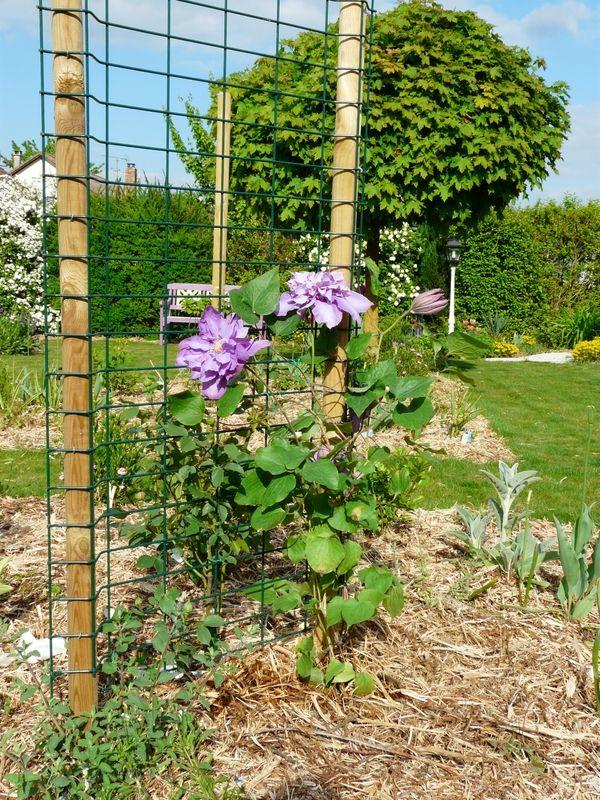 Les 17 meilleures id es de la cat gorie support plante grimpante sur pinteres - Support fer forge pour rosier grimpant ...