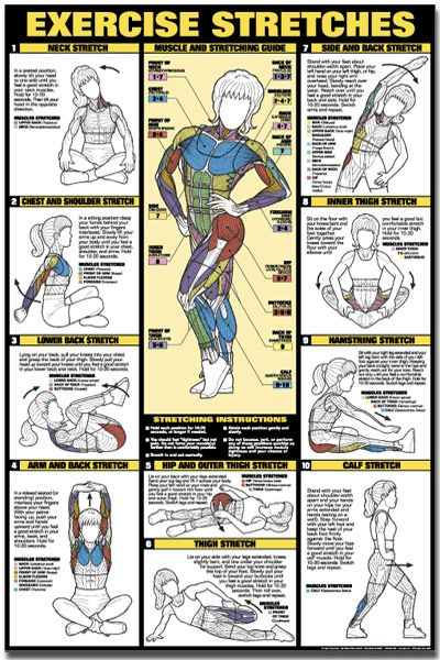 Image detail for -Back Stretch Exercise Back Stretch Exercise