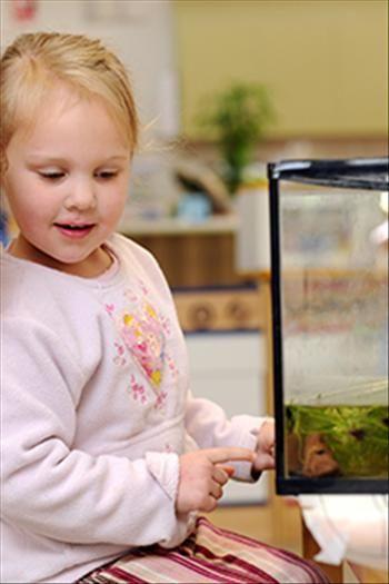 Great Start > Setting up a fish tank