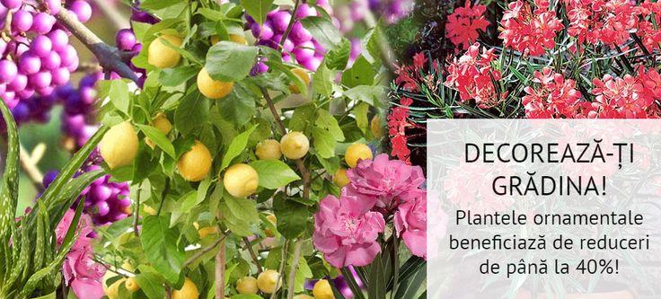 Decorează-ți grădina la prețuri imbatabile! Acum poți achiziționa plante ornamentale cu REDUCERI de până la 40%!!!! Comandă aici: https://gradinamax.ro/promotii/plante-ornamentale-40!!!