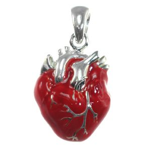 Anatomical heart. so real you can almost see it beat.