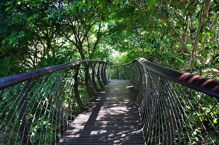Inside the canopy, boomslang, Kirstenbosch Gardens, Cape Town, South Africa        Fun Things To Do In Cape Town This Summer Nomadic Existence