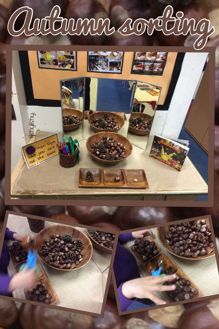 Autumn sorting Finger Gym. Using tweezers and scoopers to transfer conkers, lentils, pine cones and branch discs.