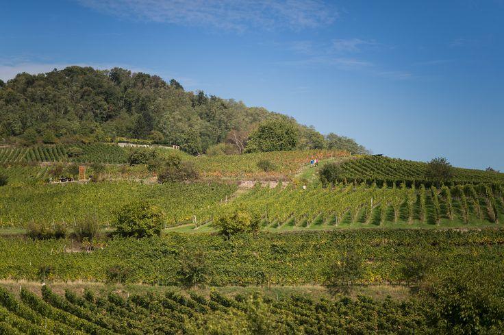 Die sonnenverwöhnten Hänge der Bergstrasse in Hessen bringen gehaltvolle und edle Weine hervor.