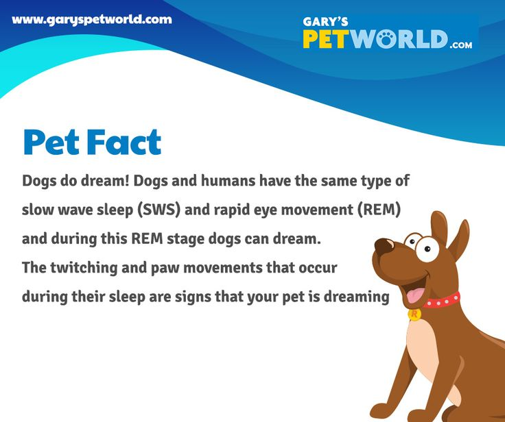Dogs do dream! Dogs and humans have the same type of slow wave sleep (SWS) and rapid eye movement (REM) and during this REM stage dogs can dream. The twitching and paw movements that occur during their sleep are signs that your pet is dreaming. #petfact #pets #petworldie