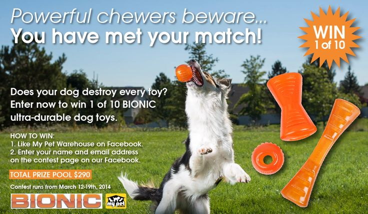 WIN 1 of 10 Bionic ultra-durable dog chews! | Great for powerful-chewers | Enter here - https://www.facebook.com/mypetwarehouse/app_1418210811744035