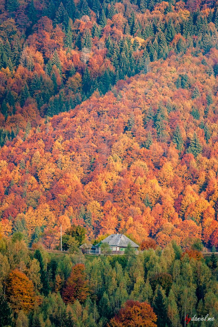 #Autumn in the #Carpathian #Mountains. Join our #photo #tours for great pictures. #Romania #travel #photography #nature #landscape