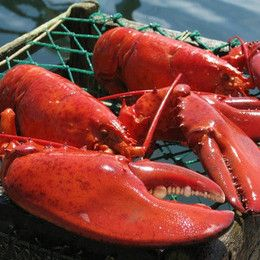 Mail Order Online Gourmet Food Gifts - Catch a Piece of Maine, PORTLAND, ME