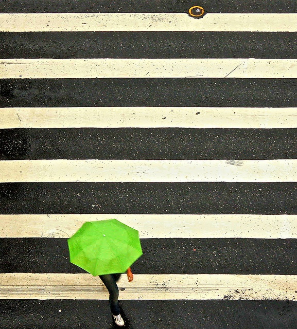 #NMFallTrendsGreen Things, Green Photography, Art Photography, Stripes Photography, Neon Green, Colors Rainbows, Limes Green, Pretty Green, Green Umbrellas