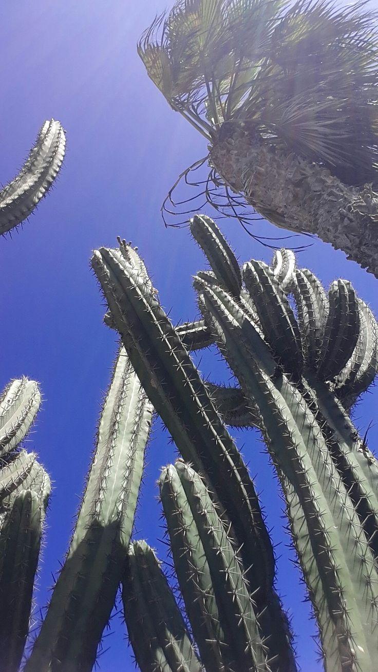 Fuerteventura Instagram:@seashell.sun